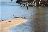 One of the freshwater Crocs on the Daly River - he scarpered as soon as I got close: by jmandjm, Views[107]