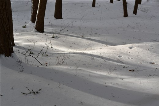 In the woods, the sun was breaking through the clouds at random intervals and I liked how the shadows of the trees fell upon the bright snow.