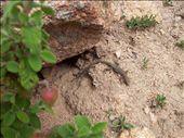 Jurassic parc version Corsica: by jmoison, Views[123]