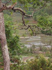 Une riziere a cote du village  Rice field by the village: by jmoison, Views[177]