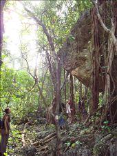 Ballade das la foret au cap des pins  Walk in the forest at Cap des pins: by jmoison, Views[262]