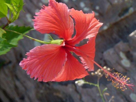 pretty flower!