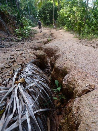 big jungle crack ;o)