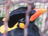 a bird that could speak thai!!: by jo_and_matt, Views[150]