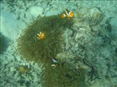 nemo's distant relatives :) .....!: by jo_and_matt, Views[225]