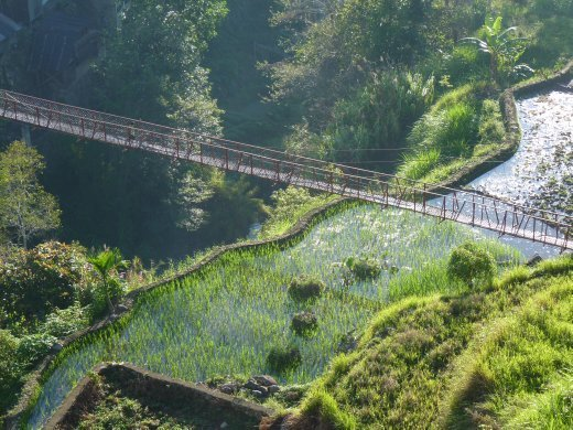 Rickety bridge across rice terraces...