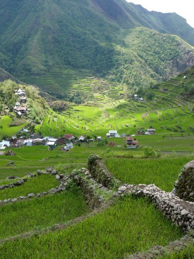 The amphitheratre of rice terraces surrounding batad