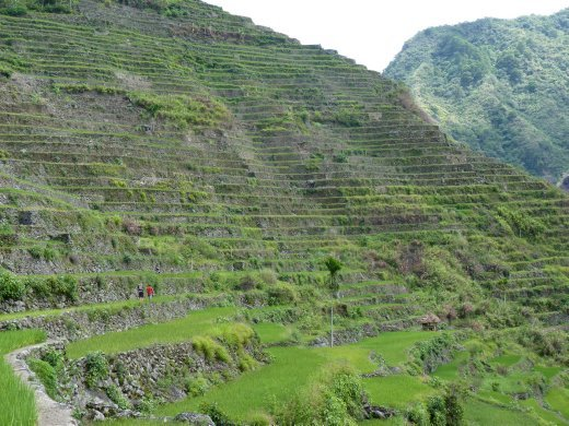 gives you an idea of the immense size of the towering terraces.. matt and our guide look tiny !!