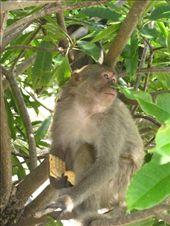 Why is matt in a tree??!!!: by jo_and_matt, Views[178]