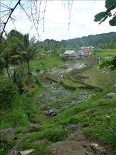 Views over rice terraces of Tetu Batu: by jo_and_matt, Views[167]