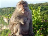 Oi you Cheeky Monkey!!: by jo_and_matt, Views[423]
