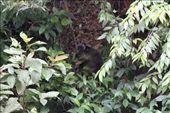 tree kangaroo: by joannah_metz, Views[249]