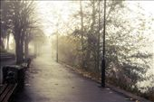 The walk in fog: by johanna, Views[192]