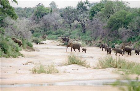 Follow the leader, Kruger NP