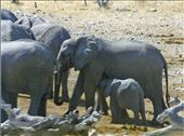 Move over, you guys! Etosha NP; Namibia: by johnandconnie, Views[230]