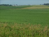 More of the same in Minnesota - lush farms of corn and soybeans: by johnkeith, Views[195]