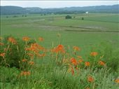 tiger Lilys and rolling hills in SE MN - looks like the East now: by johnkeith, Views[232]