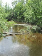 Tannin colored stream in the forest of central Michigan: by johnkeith, Views[173]