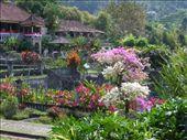 Gardens at water palace Tirta Ganga: by johnsteel, Views[345]
