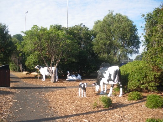 Cow sculptures in Cowaranup