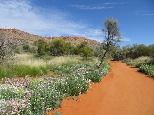 Alice Desert Park