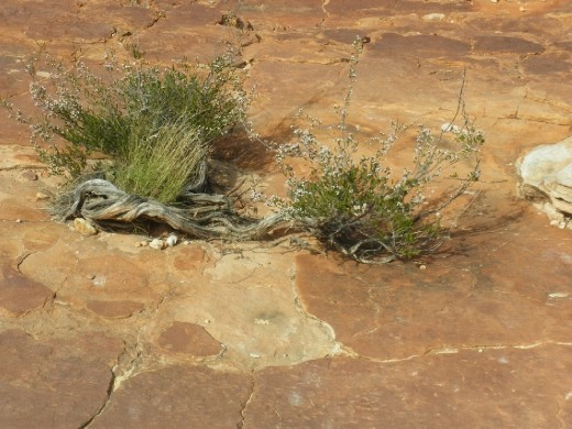 Nature's Ikebana at King's Canyon