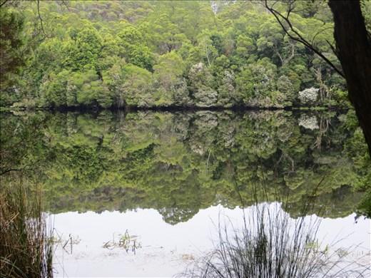 Reflections, Pieman River