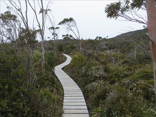 Boardwalk Hartz Mountain