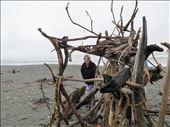 Beach sculptures Hokitika: by johnsteel, Views[79]