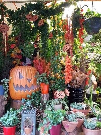 Halloween in Stokey