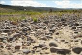Wyoming can be an extremely dry place, but where there are rivers small vegetation manages to poke through the sandy soil.: by jonathanfm, Views[135]