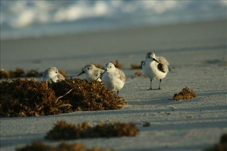 The only birds on Miami beach I was allowed to approach.