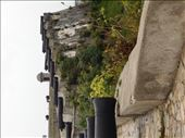 Exploring Fort de San Carlos.: by jorjejuanita, Views[115]