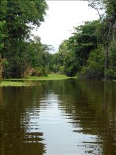 Typical Amazon river view. Untouched, dense, green.: by jorjejuanita, Views[56]