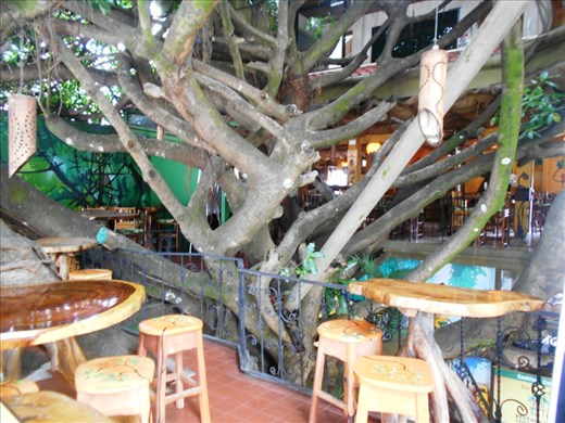 Bizarre restaurant, in a tree house. Great pizza and Costa Rican coffee after a big day zip-lining through the forrest canopy.