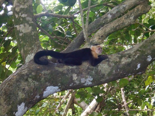 Monkeys on the beach. The forest is just a few metres from the water's edge.