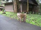 old man makak: by jornsalve, Views[227]