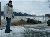 Shona loved the moose but they wouldn't stand up for her: by josh_shona, Views[140]