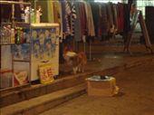 A doggie: by joshuapatterson23, Views[152]