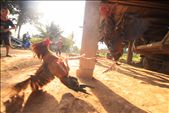 Moving toward the northern point of Myanmar brought me through a dusty rustic rural Myanmar. Here children entertain themselves with an afternoon of cockfighting: by juancwest, Views[117]