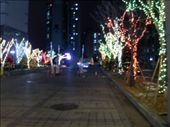 The drive way up to my appartment buildings still a little xmassy but so pretty.: by jubaloo, Views[431]