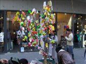 Korean Wish tree in Seoul: by jubaloo, Views[442]