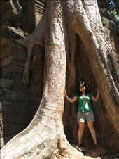 angkor: between a big arse tree: by juchee, Views[199]