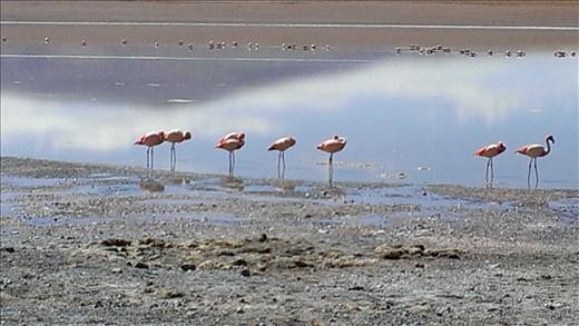 SFT - Day 2 - flamingos