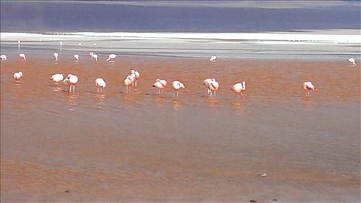 SFT - Day 2 - Laguna Colorada - red due to algae