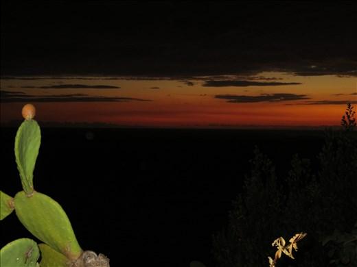 Corniglia - sunset - cactus flower in foreground