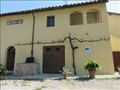 Winery - very old vine on outside: by jugap, Views[151]