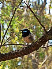 Little Bird.: by just_josh, Views[84]