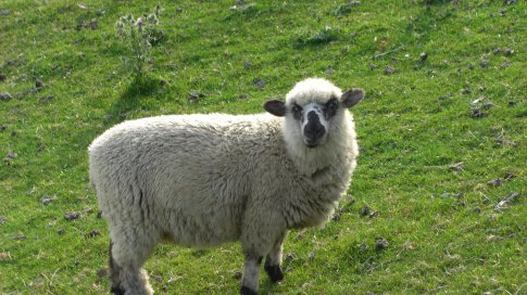 What Ewe looking at!!!! Apparantly there are 59,999,999 more of these in NZ!!!!!!