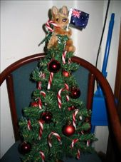 This is our tiny little xmas tree with Joey the angel on top.: by justin_and_leigh, Views[282]